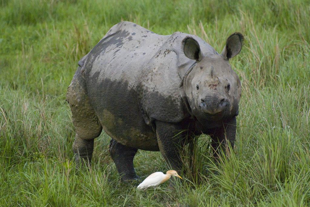 Kaziranga, the last Indian Rhinos\' Refuge - Tendua - Association for ...